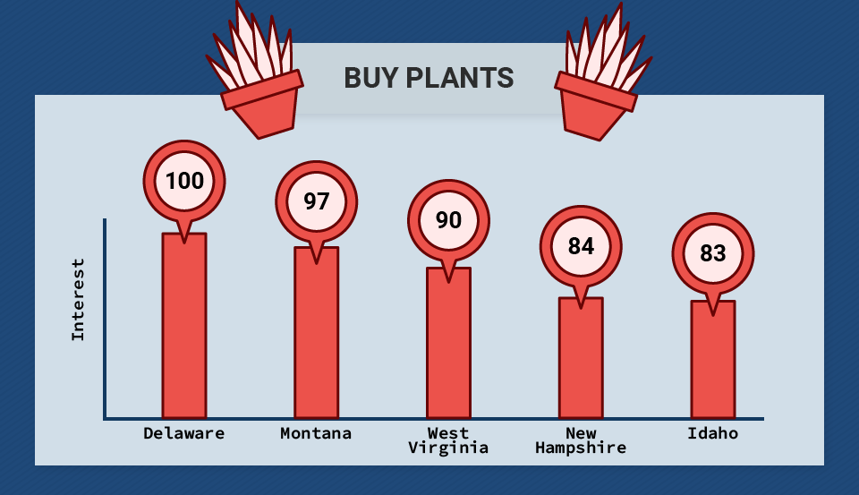Buy Plants Search Queries